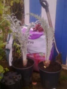 artichoke aquisitions