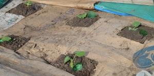 layzee planting