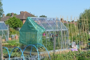 shaded greenhouse