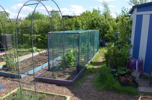 fruit cage2