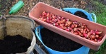 oca from the bag