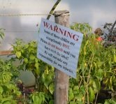 chilli warning