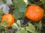 rouge vif turning orange