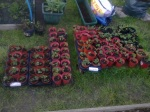 104 strawberry pots