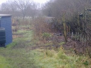 blackthorn hedge rehabilitaton