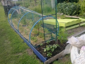 fruit bed and bean ladder