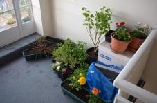 balcony plants