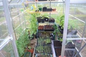 greenhouse May 2016