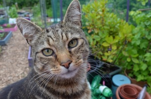allotment cat