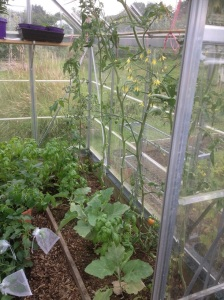 blighted greenhouse - right