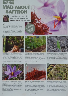 GYO saffron article Aug 2016 edition
