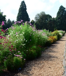 cosmos-trial-at-wisley