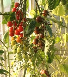 sweet-aperitif-tomato