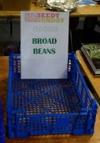 empty-beans