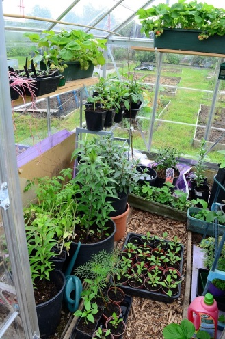 Greenhouse - left
