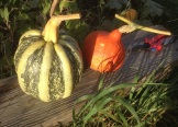 Tonda Padana and Potimarron squashes