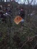 toast on trees