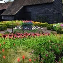 tulips to barn