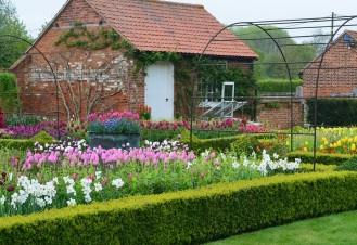 tulips to poolhouse